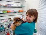 Ветеринарная клиника ЛапУшки, город Дмитров